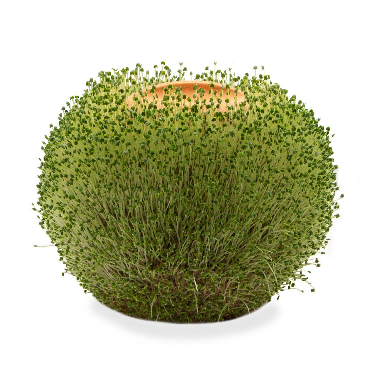 Ronde Terracotta Plantenpot